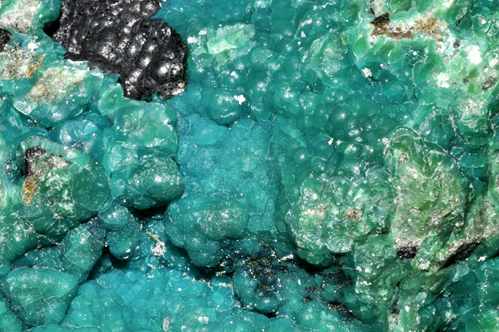 Bright colored blue-green chrysocolla forming botryoidal aggregates and crusts