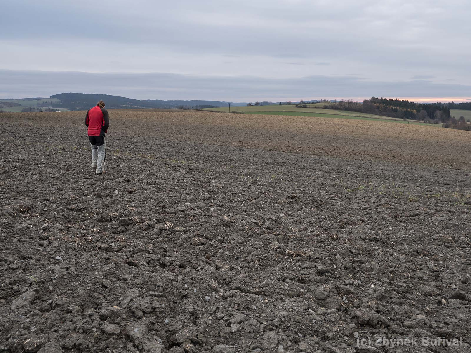 Collecting almandine garnet on the ploughed field near Ústup village, Czech Republic