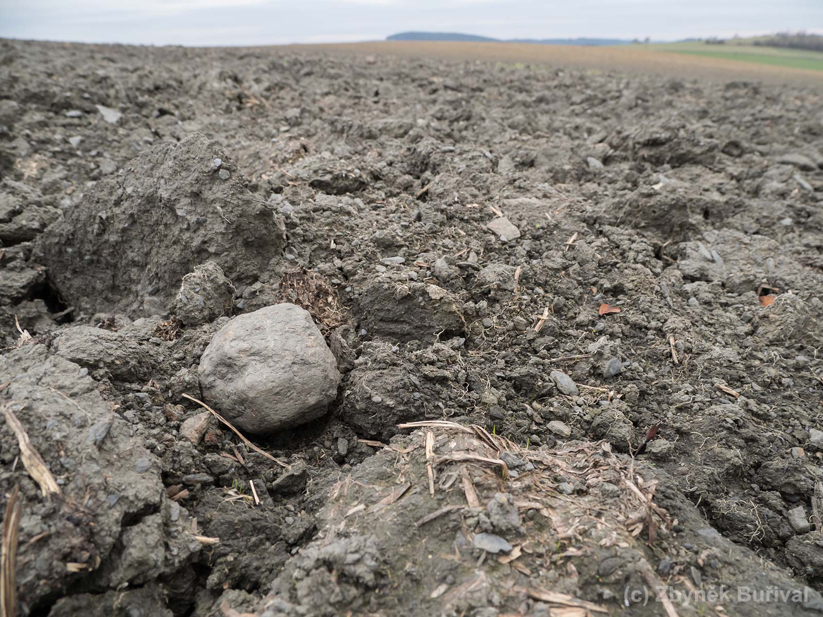 Big almandine garnet crystal on the ploughed field