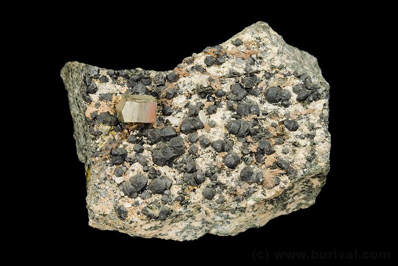 Pyrite, Clinochlore