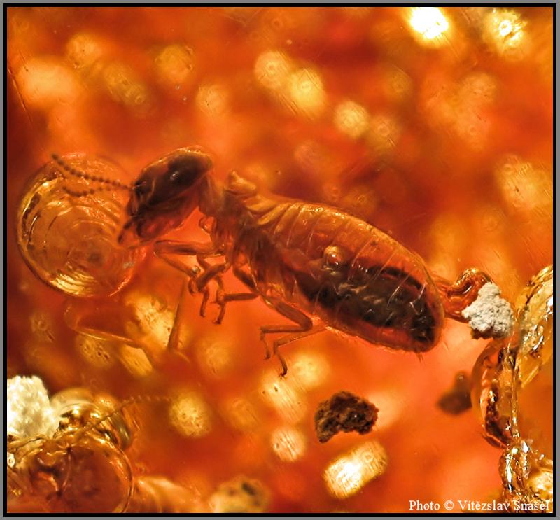 Kopal (termite Fossil)