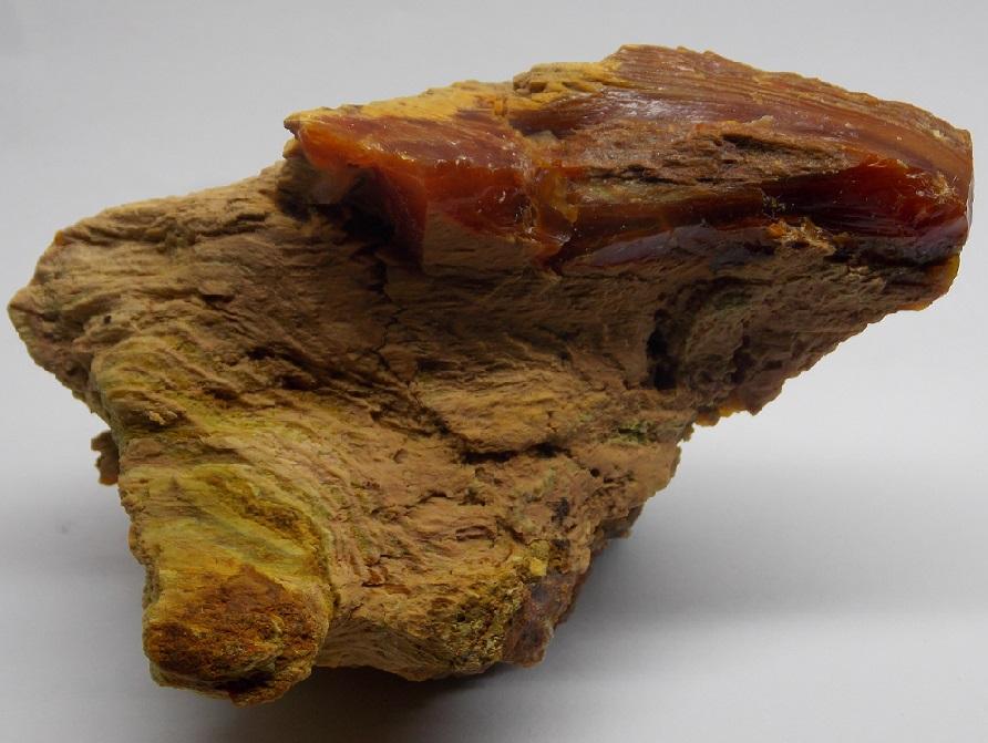 Opal (var. Wood Opal)