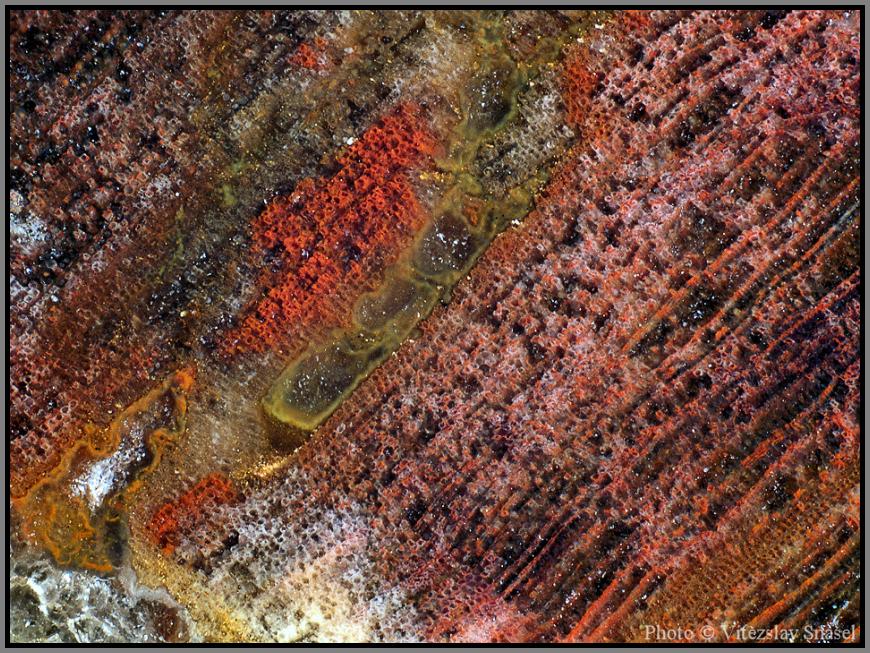 Quartz (var. Petrified Wood)